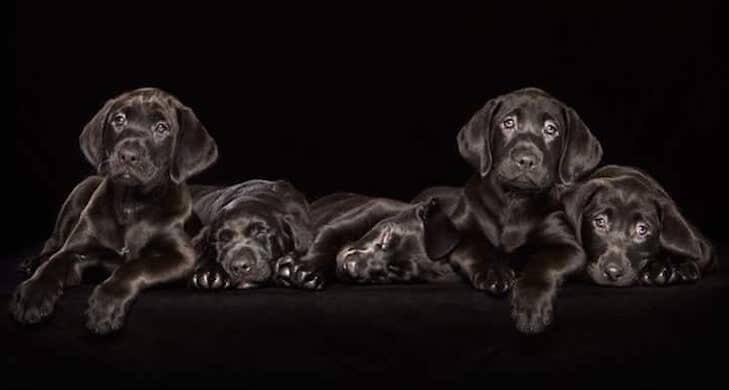 Портреты черных бездомных собак