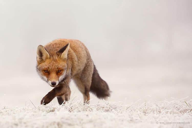 Фотографии дикой природы Roeselien Raimond (Розелин Раймонд)