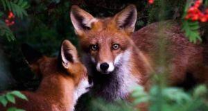 Фотографии диких животных от фотографа и исследователя Joachim Munter (Йоахим Мантер)