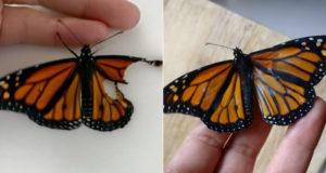 Как восстановить сломанное крыло бабочки - мастер-класс от художницы по костюмам Romy McCloskey