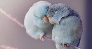 Домашние попугайчики в фотографиях Rupa Sutton (Рупа Саттон)