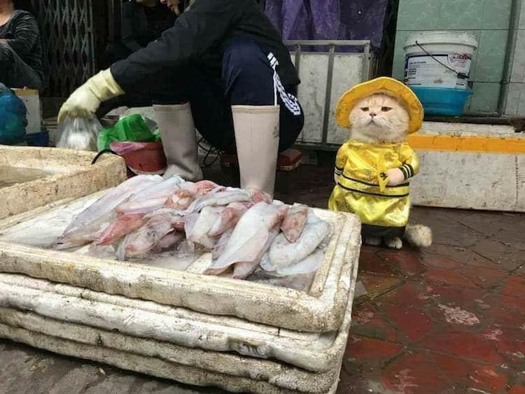 торговец рыбой - кот по кличке Собака