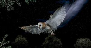 Птичья охота в фотографиях Mario Cea (Марио Цеа)